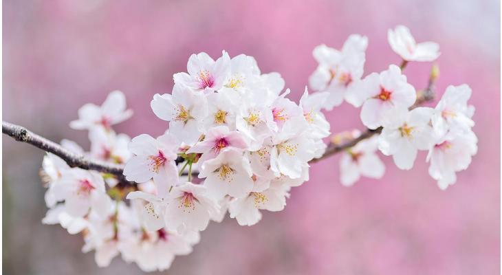 Blühende Heckenpflanzen im Frühjahr