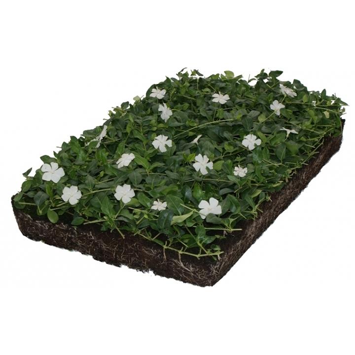 Bodendecker-Arten pflanzen: wo?