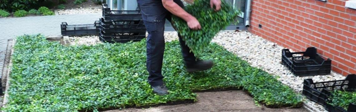 Bodendecker pflanzen Online