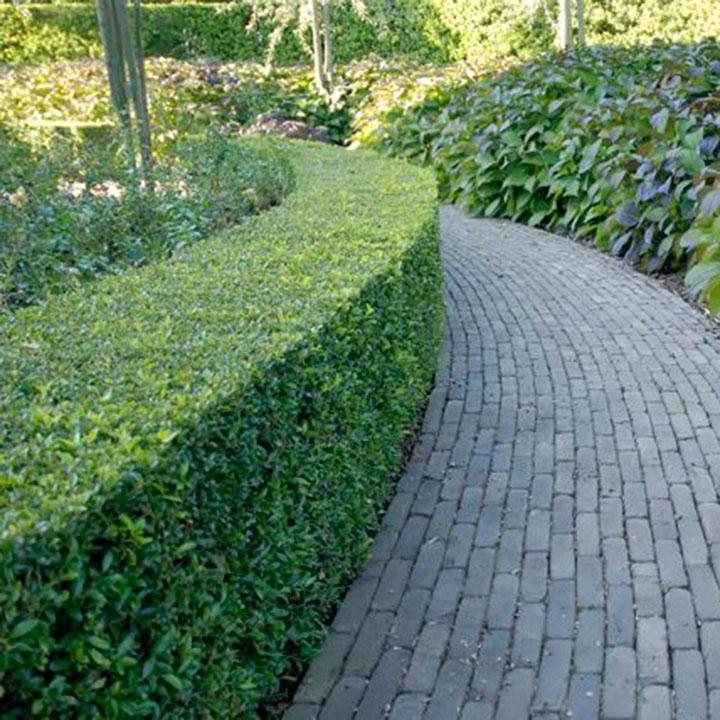 Formelle und informelle Hecken für moderne Gärten