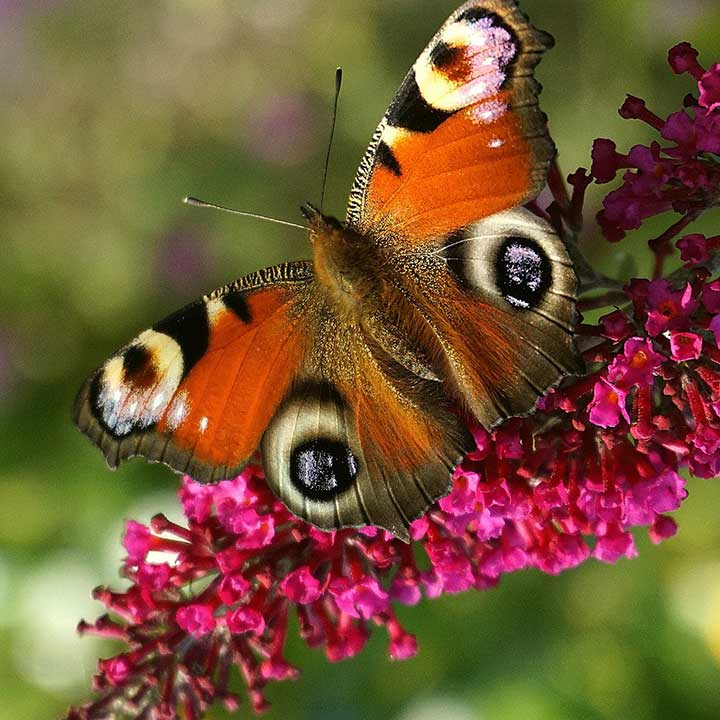 Gartenpflanzen-Arten aussuchen