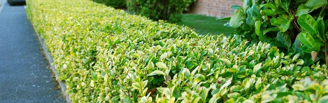 Ideen zur Gartengestaltung und weitere Informationen