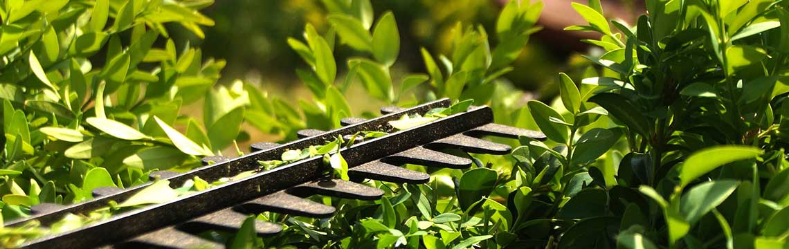 Pflanzung Pflege Fertig-Hecke